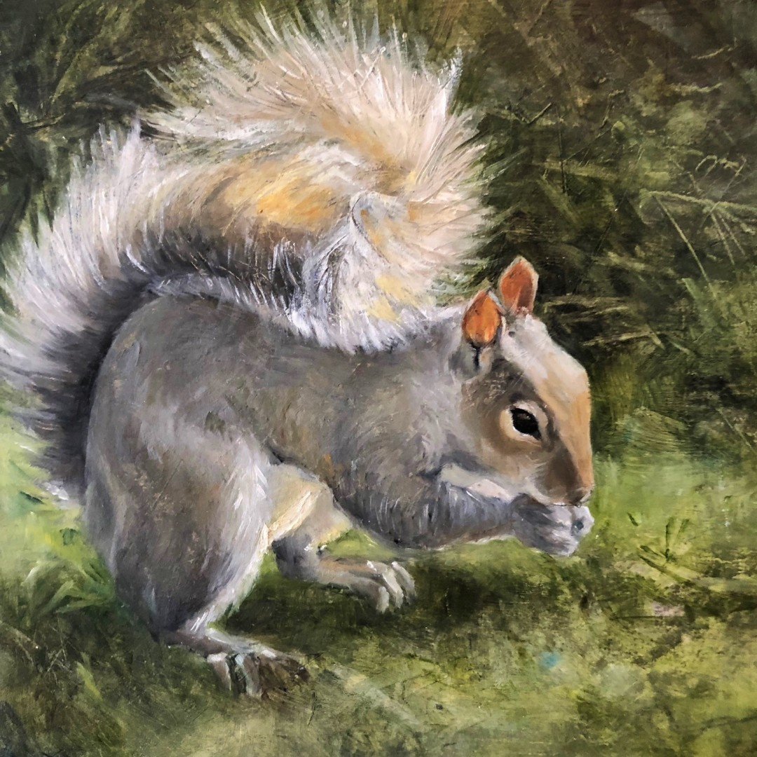 Squirrel in Morning Light