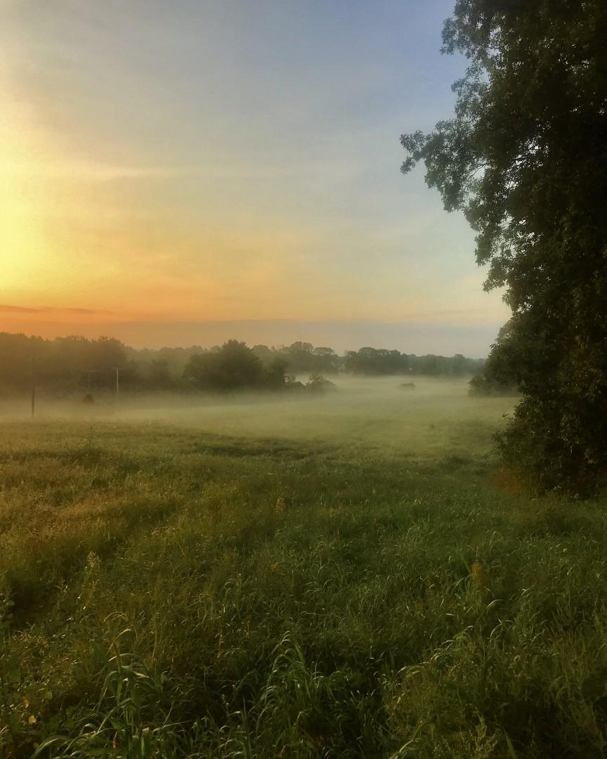 Misty Meadow Morning