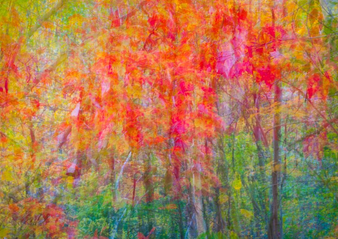 Acadia autumn abstract
