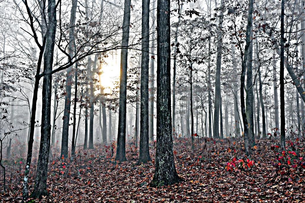 Enchanted Forest - Foggy Sunrise