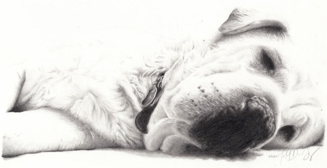Sammi - artwork by Michael De Jong:  Animals, Realism, Pencil/Colored Pencil, Paper