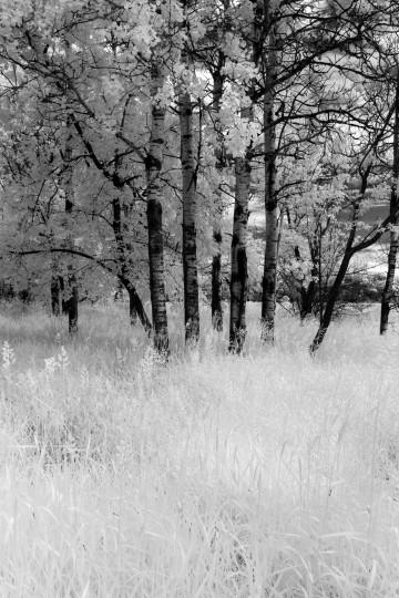 Aspen Fields