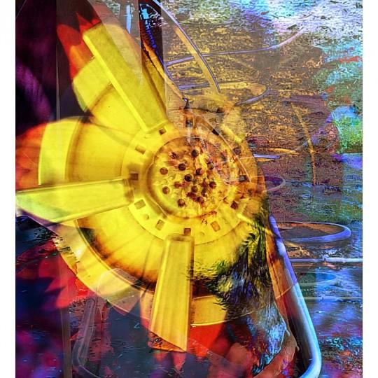 Monet's flower