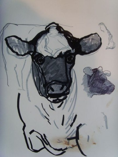 Calf with Chocolate Smudges or a Milk Chocolate Cow