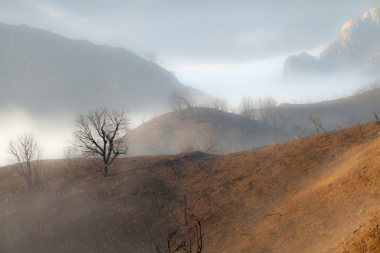 Malibu Mist After Burn_8408