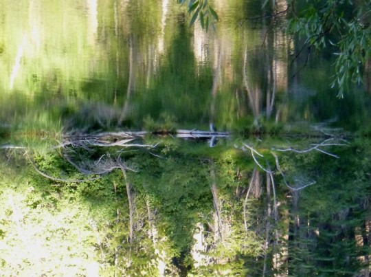 Lake Mamie Reflection