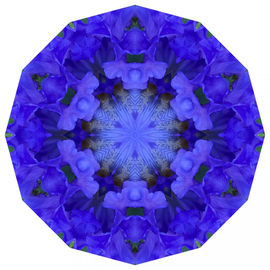 EasterOver Iris - Mandala 042119 - artwork by Elizabeth Addison: nature, environment, printmaking, abstract, digital Nature, Other, Printmaking, Paper