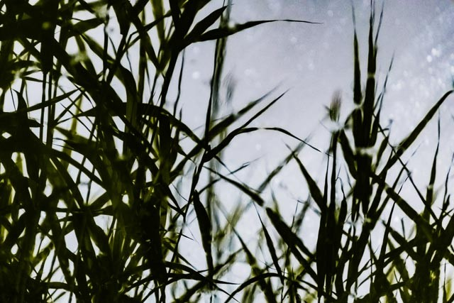 Blades of Grass reflection photography creative photography