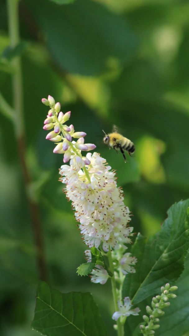 Pollinative - artwork by Wendy Trucheon: bees, flowers, pollinators, gardening, nature, naturephotography, pollinative, nativeplants, ,outdoors, pollinations, beelover Nature, Realism, Photography Digital, Paper