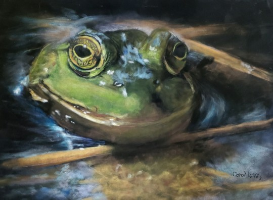 Pond Frog