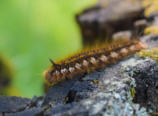 Caterpillar in Russia