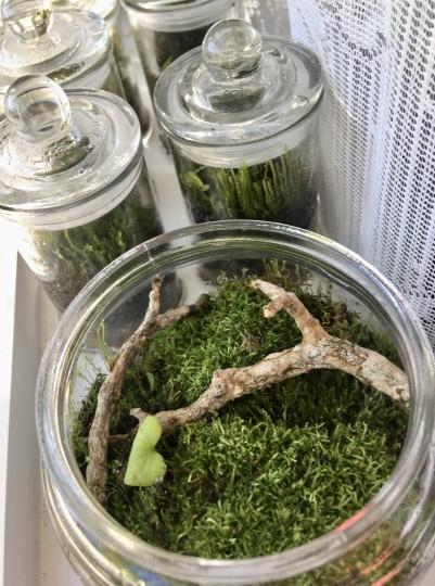 Local moss terrariums