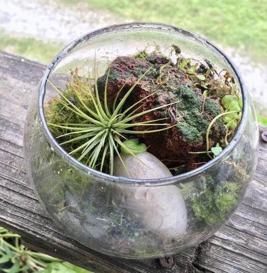 Local moss terrarium