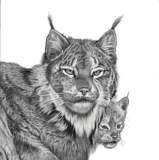 Lynx and Cub