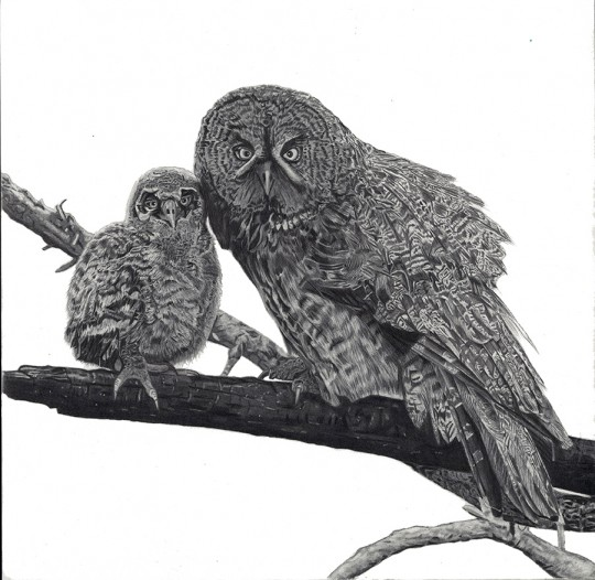 Great Gray Owlellets