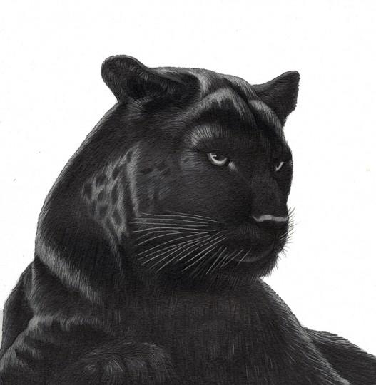 Panther, Black