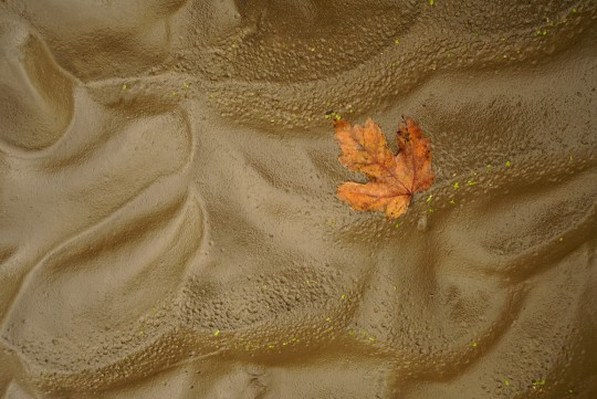 Maple Leaf and Mud Patterns