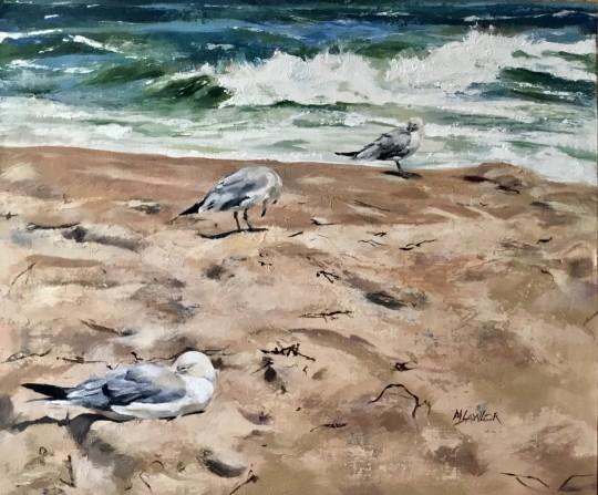 Herring Gulls, Manasquan Beach