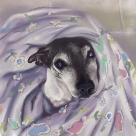 Kasey (the dog)