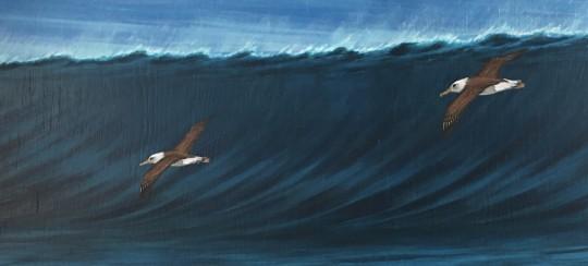 UntitledAlbatross riding waves