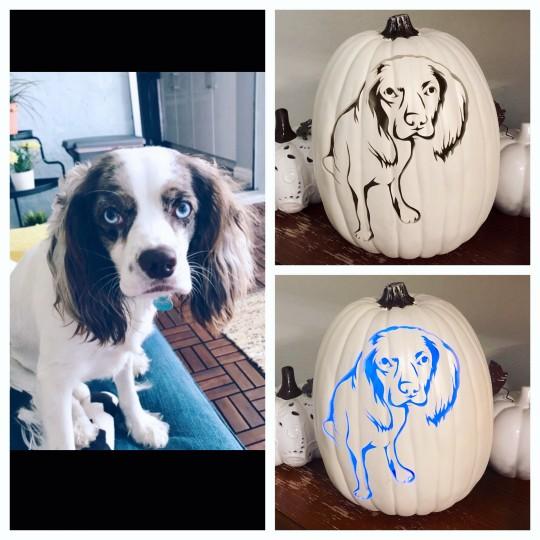 Custom Pet Pumpkin