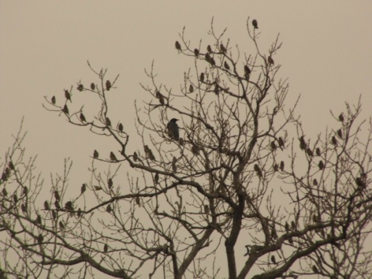 The Raven Among Crows