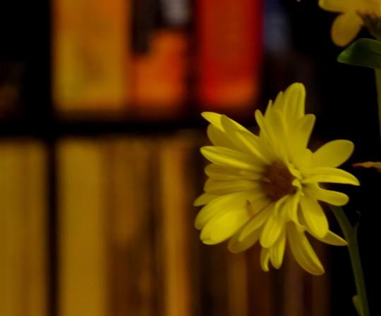 Fleur de Jeune