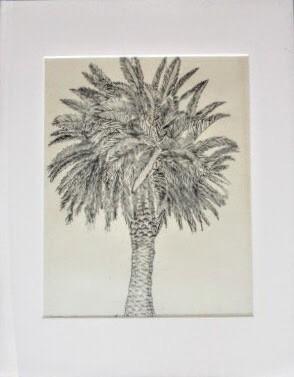 """Tiburon Palm"""