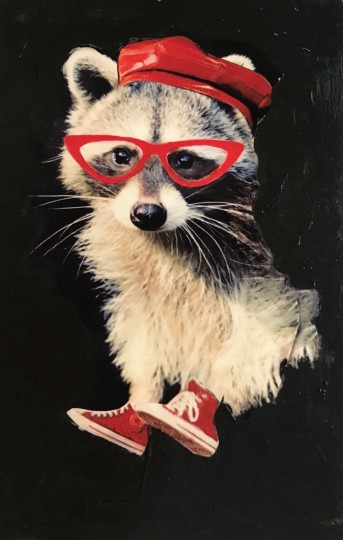 Baby Raccoon Likes Red!