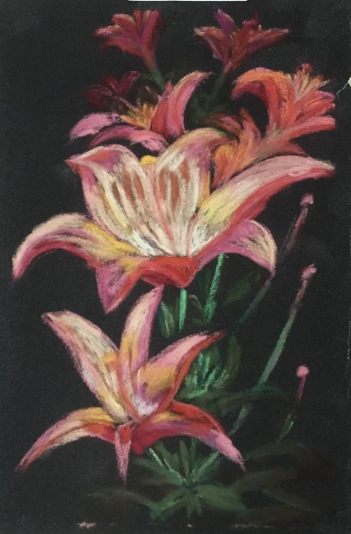 Asiatic Lily on Black - artwork by Barbara Segen-Gould: