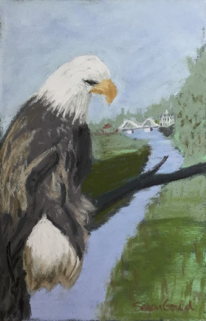 Eagle on the Connecticut - artwork by Barbara Segen-Gould: