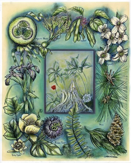 TN Native Plants