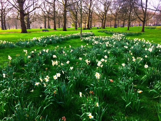 London daffies