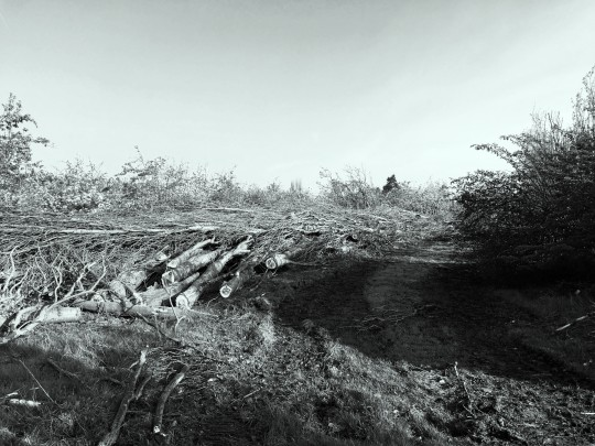 Twiglet forest