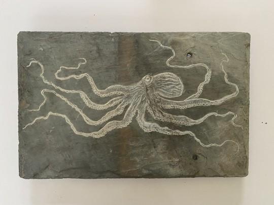 octopus #7