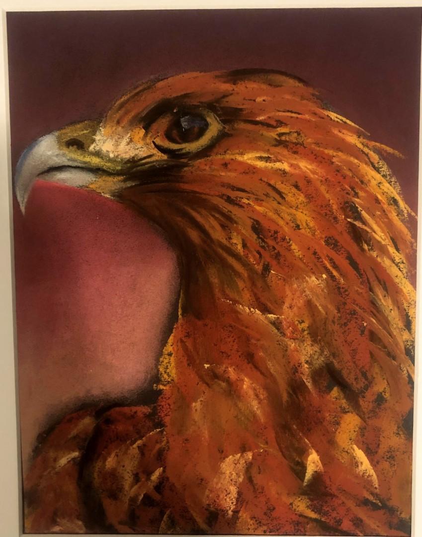Golden Eagle - artwork by Caitlin Pollock: eagle, wildlife portrait Animals, Impressionism, Pastels, Paper