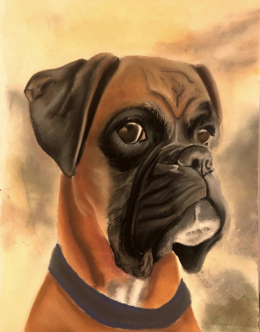 Untitled - artwork by Caitlin Pollock: boxer, dog, pet portrait Animals, Realism, Pastels, Paper