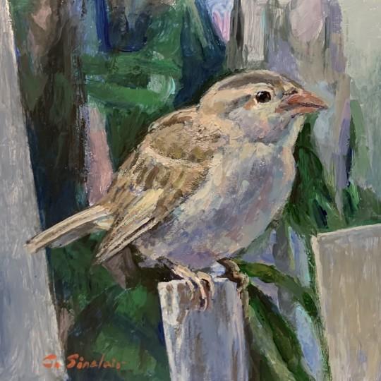 Sparrow in Gemeva