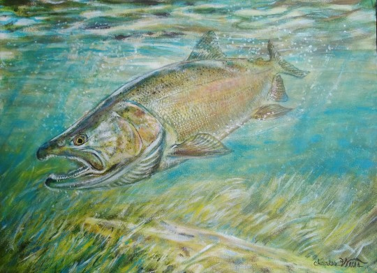 Coho on the Charge