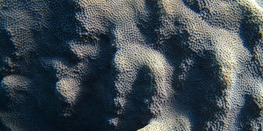 Brain Coral Waterscape