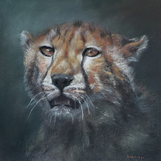 Cheetah on Prowl