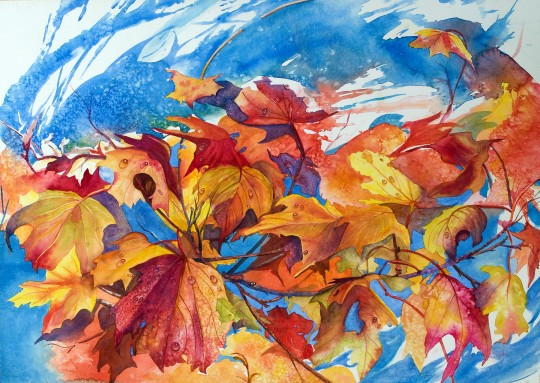 Maple Leaves blowing in the  Fall wind