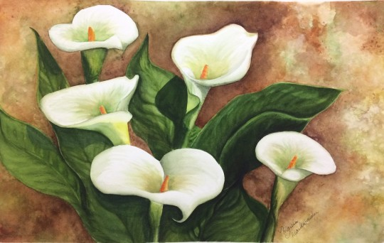 Calle Lilies in Bloom