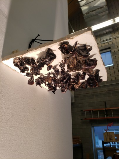 Too Mushroom on the Ceiling