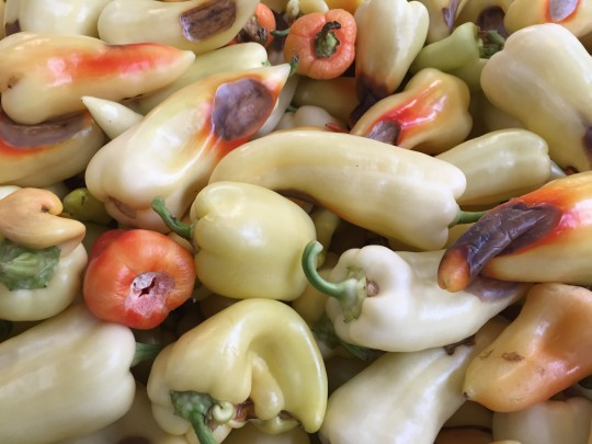 Peppers-A-Plenty