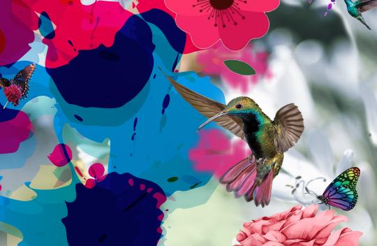 Birds & Butterflies I