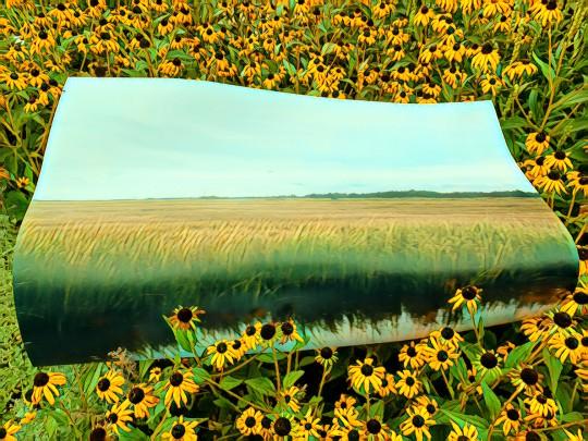Wetland 3