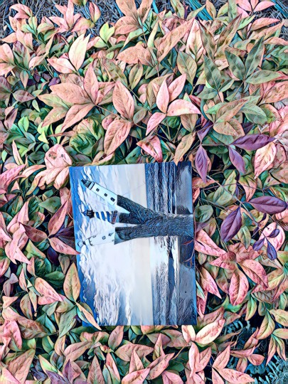 Lost Postcard Series