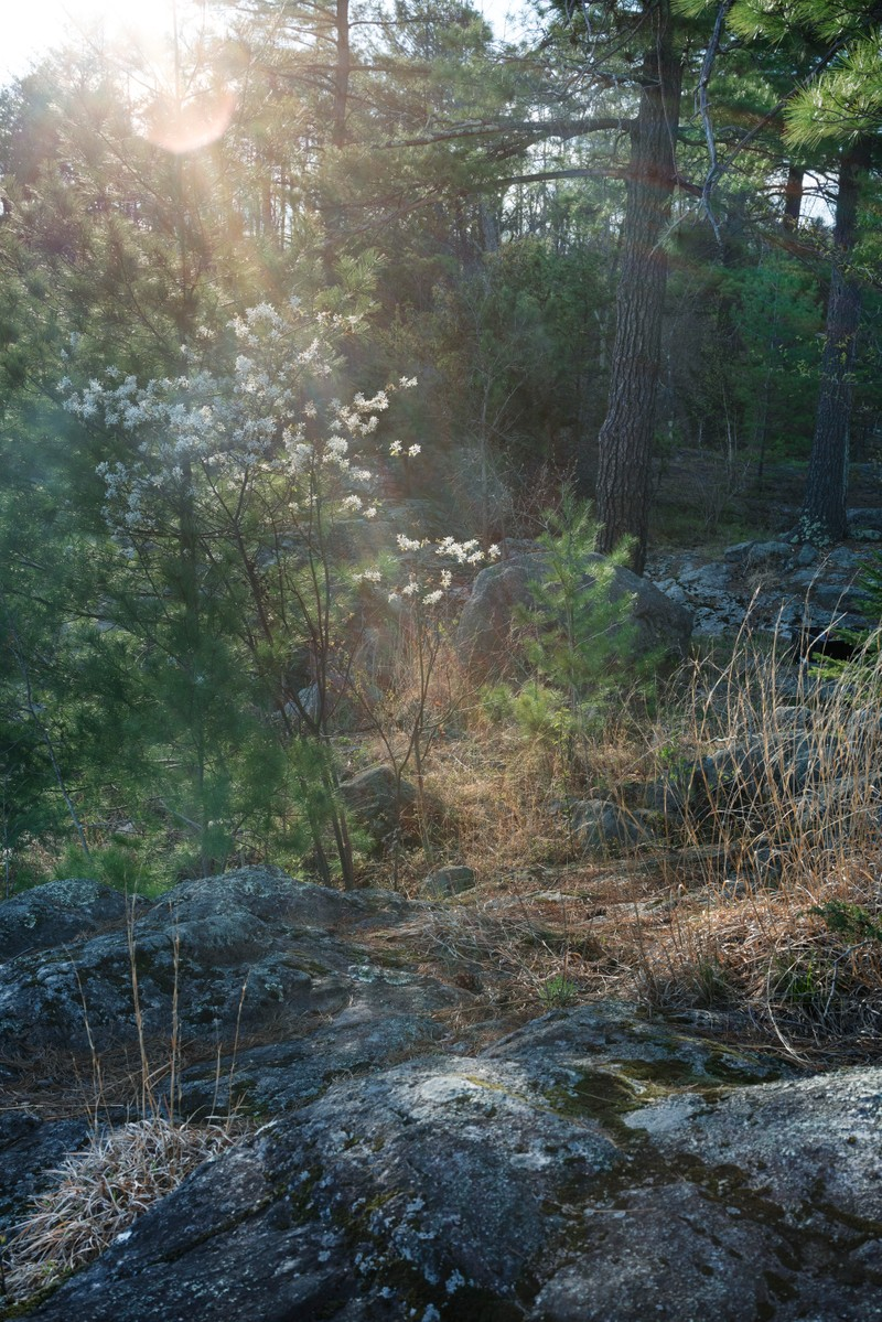 Artwork – Sunlight in Vermont, 08 May 2018 (small), 2018