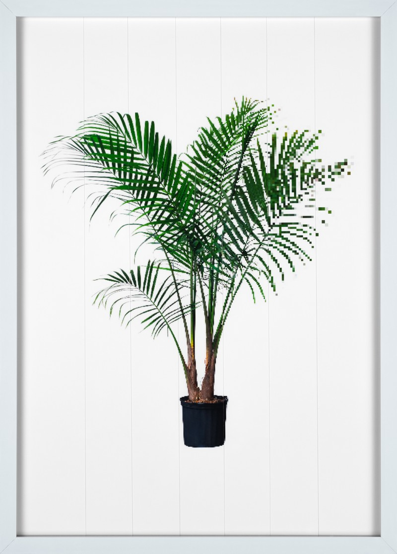 Artwork – Palm (Compression), 2016